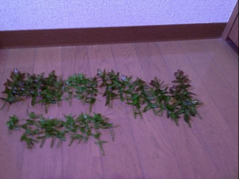 20111231-002241.jpg